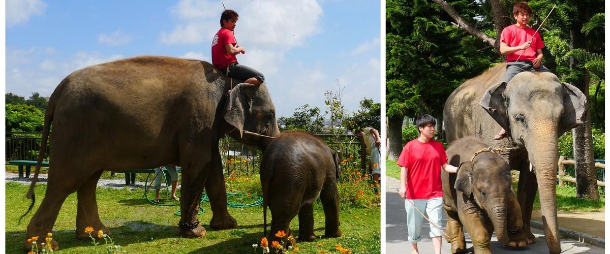 親象と子象