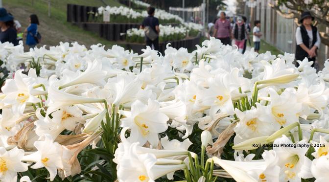 第3回大石公園ゆり祭り 2015