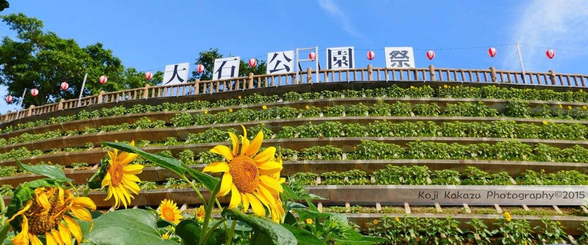 第2回大石公園ひまわり祭り2015