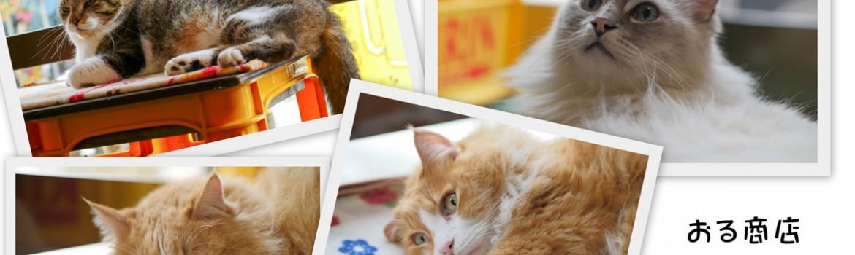 おる商店の猫